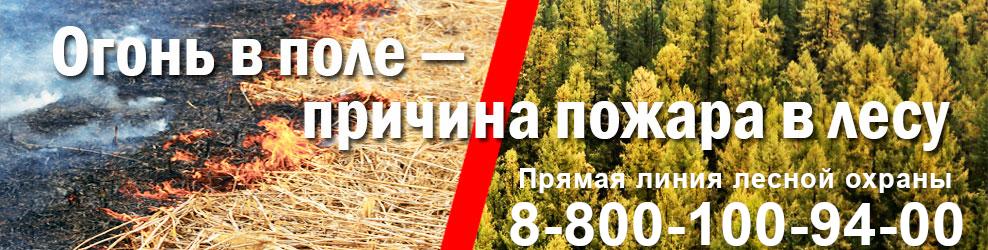Защитим лес от пожаров - памятки, материалы