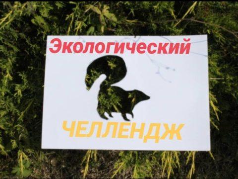 Экологический фото-челлендж «Эти забавные животные»