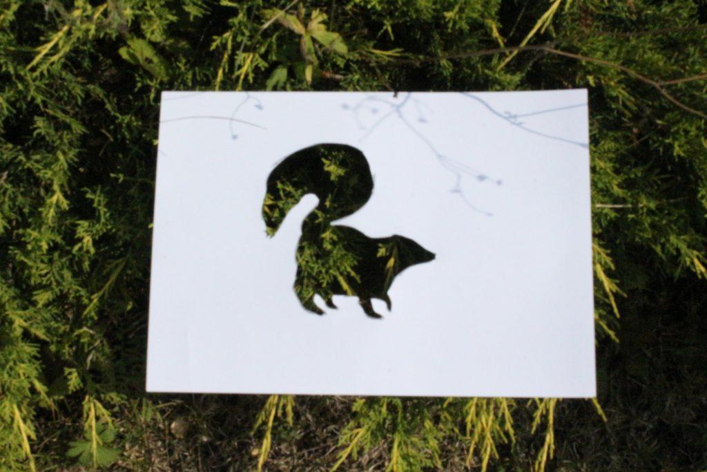 Экологический фото-челлендж «Эти забавные животные» - Барсук