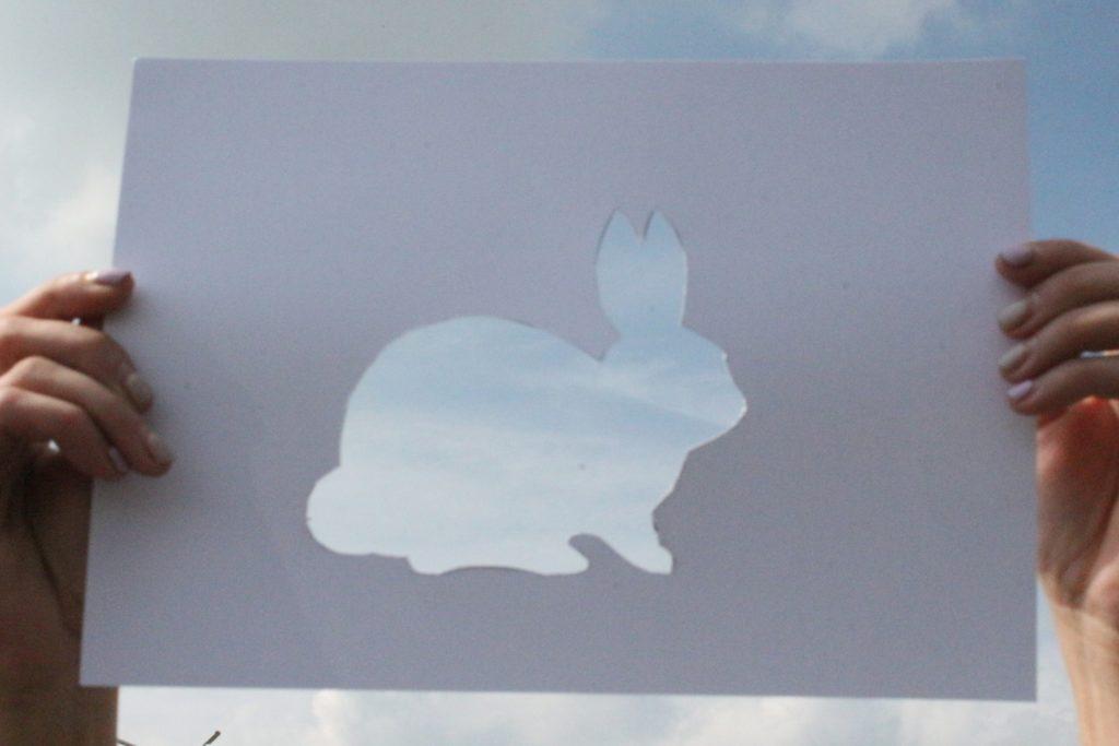Экологический фото-челлендж «Эти забавные животные» - Кролик