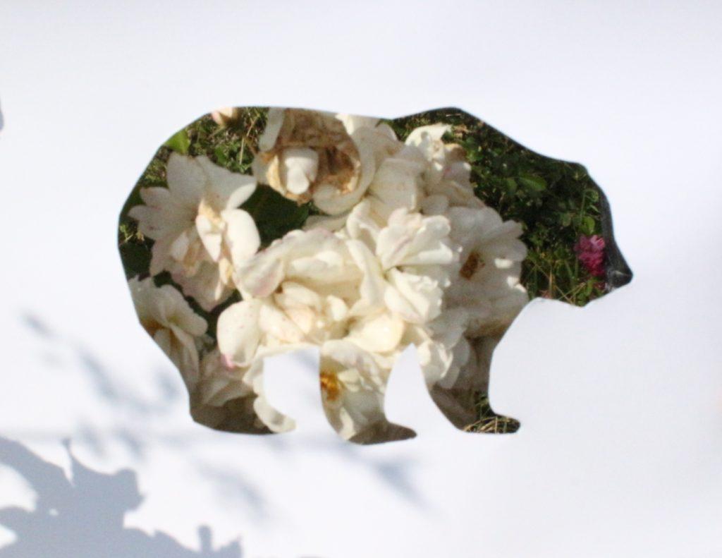 Экологический фото-челлендж «Эти забавные животные» - Мишка