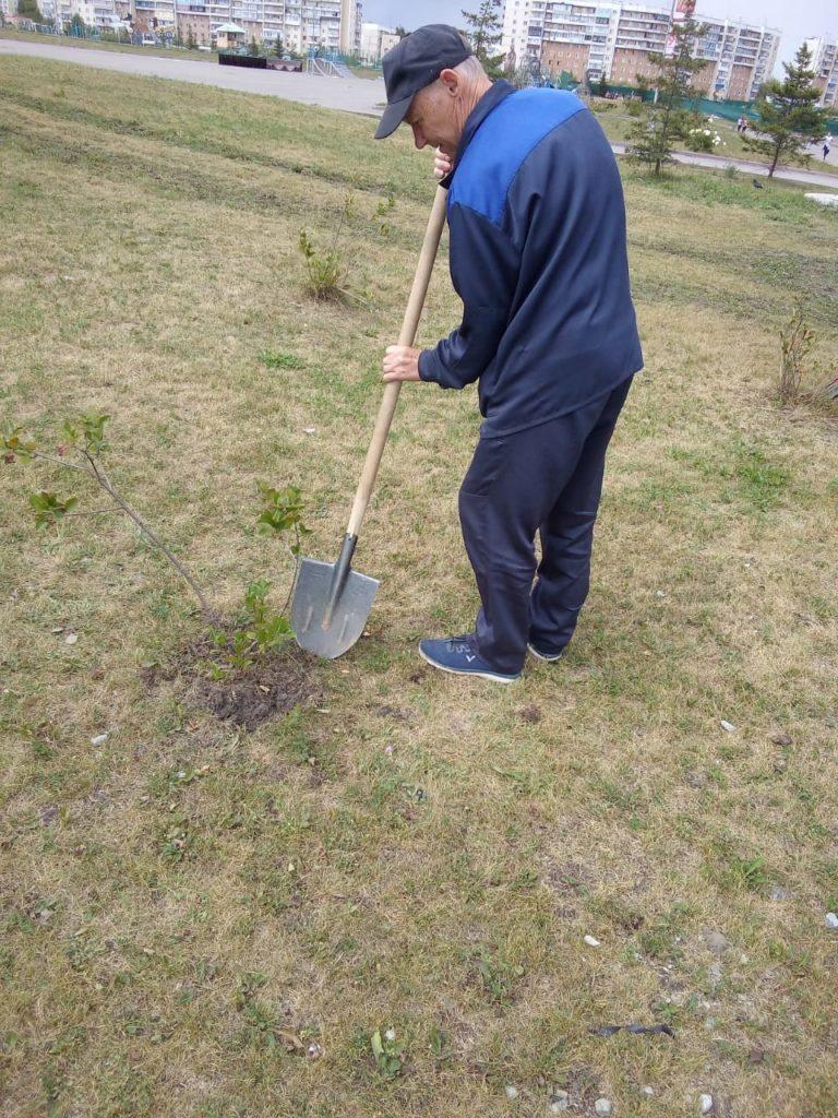 Посадка дерева сотрудниками МБФСУ СШ на прилегающей территории